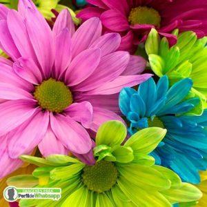 imagenes de flores de colores para compartir