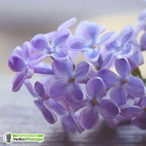 imagenes de flores gratis