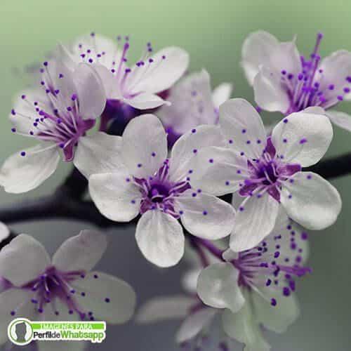 imagenes de flores hermosas para descargar