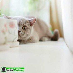 imágenes de gatitos 1