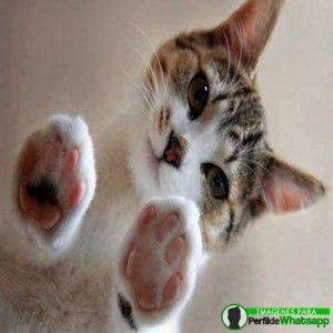 imágenes de gatitos 19