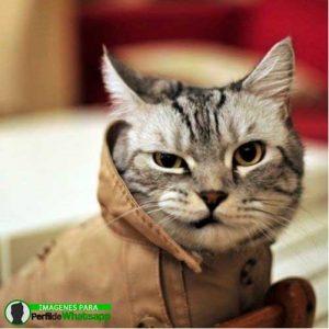 imágenes de gatitos 21