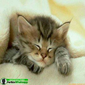 imágenes de gatitos 23