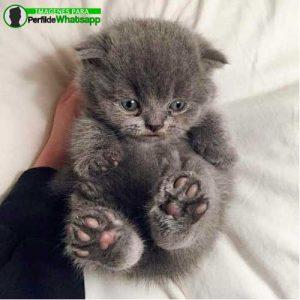 imágenes de gatitos 25