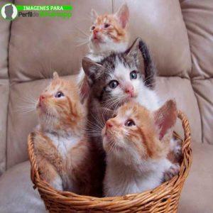 imágenes de gatitos 29