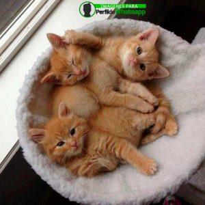 imágenes de gatitos 31