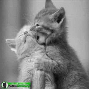 imágenes de gatitos 33