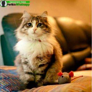 imágenes de gatitos 35