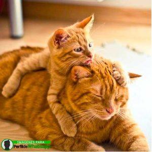 imágenes de gatitos 37