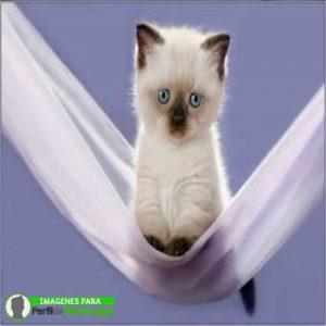 imágenes de gatitos 3