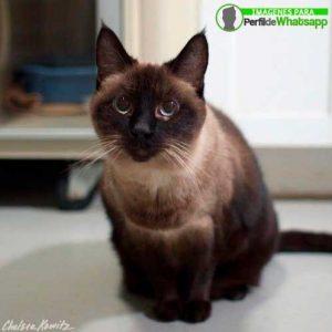 imágenes de gatitos 7