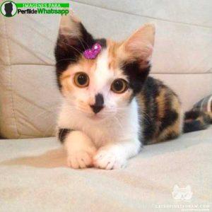 imágenes de gatitos 11