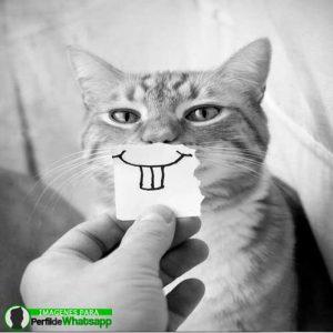 imágenes de gatitos 13