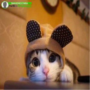 imágenes de gatitos 15