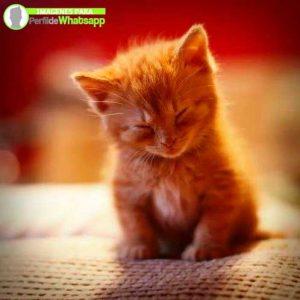 imágenes de gatitos 17