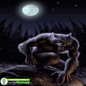 imágenes de hombre lobo 7