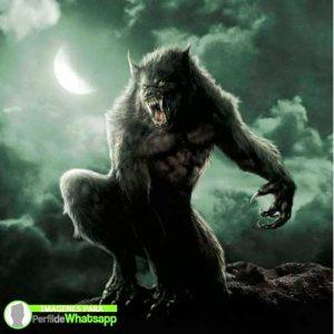 imágenes de hombre lobo 13