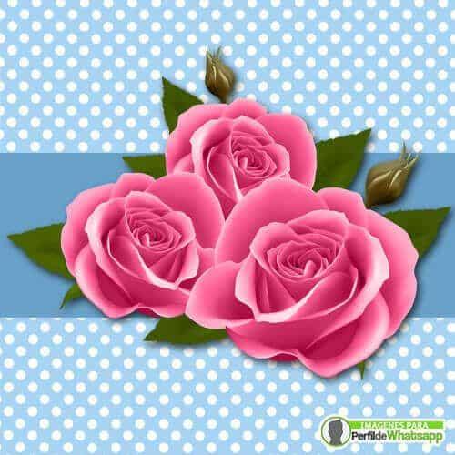 50 Imagenes De Rosas Rojas Hermosas Gratis