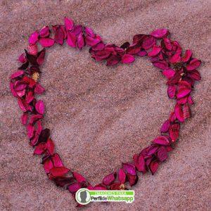 imagenes de petalos de rosas