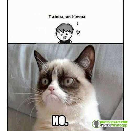 imágenes de memes de gatos chistosos
