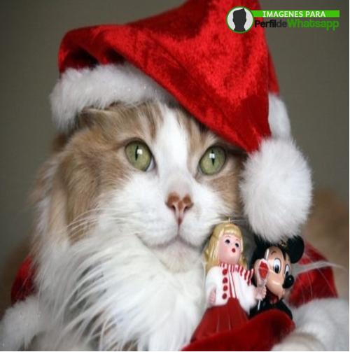 imagenes de feliz navidad amor