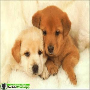 perros 16